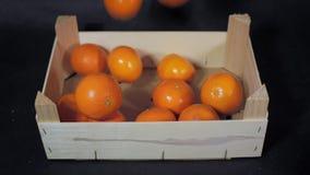 Плодоовощи заполняя деревянную коробку сток-видео