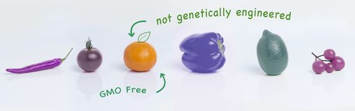 Плодоовощи, концепция биологического культивирования, отсутствие GMO стоковые фото