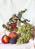 Плодоовощи на светлой предпосылке стоковые изображения rf