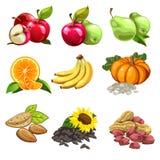 Плодоовощи, овощи, гайки, семенена подсолнуха яблоки, груши, апельсины, бананы, тыква Значки вектора для кулинарных проектов Стоковые Изображения RF