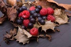 плодоовощи пущи Стоковые Изображения RF