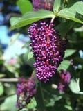 Плодоовощи - сад Мауи Eden стоковая фотография