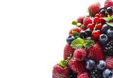 плодоовощи ягод предпосылки изолировали белизну Зрелые смородины, поленики, голубики, клубники и ежевики с mi Стоковое Изображение RF