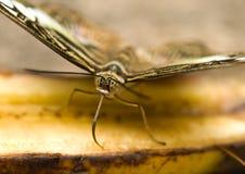 плодоовощ бабочки подавая Стоковая Фотография RF