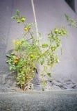 Плодоовощ бетона Стоковая Фотография