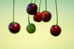 плодоовощ вишни Стоковое Фото