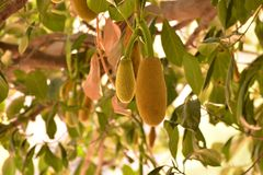 Плодоовощ дерева стоковые изображения