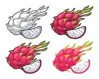 Плодоовощ дракона весь и кусок Гравировка вектора винтажная и плоский цвет бесплатная иллюстрация