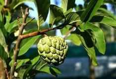 плодоовощ заварного крема яблока Стоковое фото RF
