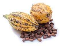 Плодоовощ какао, сырцовые фасоли какао, стручок какао изолированный на белом backgr Стоковое Фото