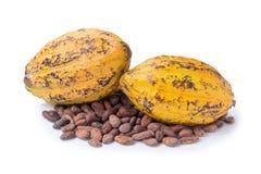 Плодоовощ какао, сырцовые фасоли какао, стручок какао изолированный на белом backgr Стоковая Фотография