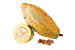 Плодоовощ какао, сырцовые фасоли какао, стручок какао на белой предпосылке Стоковые Изображения