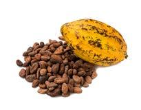 Плодоовощ какао, сырцовые фасоли какао, стручок какао на белой предпосылке Стоковое Фото