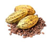 Плодоовощ какао, сырцовые фасоли какао, стручок какао на белой предпосылке Стоковое фото RF