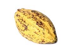 Плодоовощ какао, сырцовые фасоли какао, стручок какао на белой предпосылке Стоковое Изображение