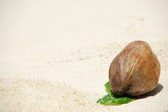плодоовощ кокоса Стоковое фото RF