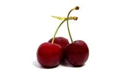 Плодоовощ красного цвета вишни на белой изолированной предпосылке Стоковая Фотография