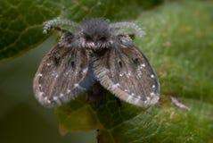плодоовощ мухы Стоковое Фото