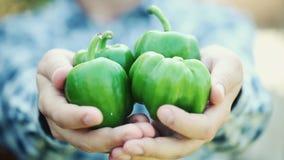 Плодоовощ перца органический зеленый в руках человека видеоматериал