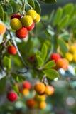 плодоовощ пущи Стоковые Фото