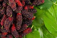 Плодоовощ шелковицы и лист шелковицы на изолированной еде плодоовощ шелковицы белой предпосылки здоровой Стоковая Фотография