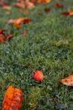 Плодоовощ яблока краба среди золотых листьев падения Стоковые Изображения RF