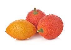 Плодоовощ Gac, джекфрут младенца, колючая горькая тыква, сладостное Grourd или c Стоковая Фотография