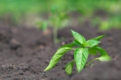 плодородная почва Стоковая Фотография