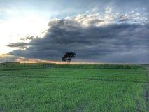 Зеленые поля и дерево стоковые фотографии rf