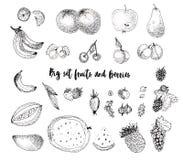 Плоды эскиза и ягоды, элементы пачки иллюстрация вектора