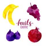 Плод установил вычерченные помарки акварели и пятна с бананом брызг, виноградины, смокву, гранатовое дерево Изолированные плоды в иллюстрация вектора