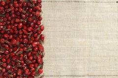 Плод шиповника на холсте стоковое изображение