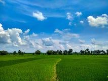 Плоская земля в Индии стоковое изображение rf