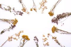 Плоская рамка положения Сухие ветви пижмы и вереска на белой предпосылке Стоковая Фотография