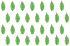 Плоские листья зеленого цвета положения на деревянной предпосылке Взгляд сверху зеленого leav Стоковое фото RF