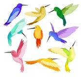 Плоский комплект вектора колибри с красочным оперением Птица Colibri с длиной утончает клювы и яркие пер wildlife иллюстрация штока