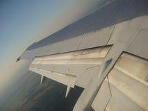 плоское крыло Стоковые Изображения