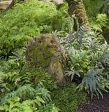 плотная вегетация пейзажа джунглей стоковое изображение