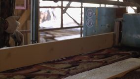 Плотник управляет промышленной машиной пилы с журналом тимберса акции видеоматериалы