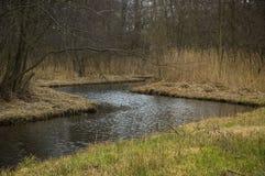 плотное река пущи стоковые изображения