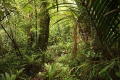 плотные джунгли стоковые фотографии rf