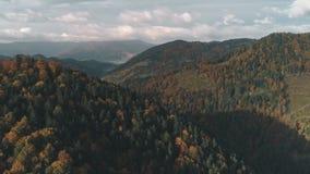Плотные леса зеленых и коричневых холмов крышки цвета сток-видео