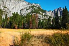 плотный желтый цвет горы травы Стоковое Изображение RF