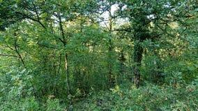 Плотный лес и Vegitation стоковые фотографии rf