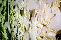 Плоть капусты Стоковые Фото