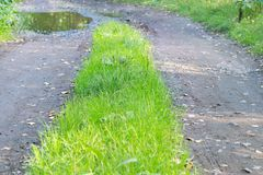 плохая грязная улица в лесе, болоте и ямах на дороге стоковые изображения
