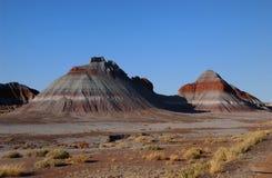 плохая petrified земля пущи Стоковая Фотография RF
