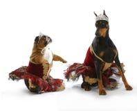 Плохие балерины Стоковое Фото