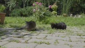 Плохие бездомные голодные маленькие коты ища еда есть в парке - акции видеоматериалы