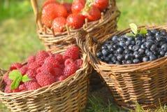 Плодоовощ лета Стоковая Фотография RF